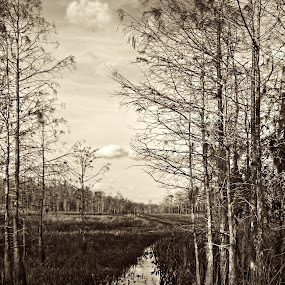 Road to Nowhere  by Chris Wilson - Uncategorized All Uncategorized ( water, airboat, black and white, florida, everglades, cypress trees, landscape )