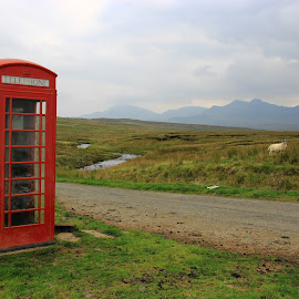 Somewhere in nowhere  by Sarah Kriegler - Landscapes Mountains & Hills ( hill, scotland, mountains, telephone box, north coast, sheep, schottland, landscape, telephone, photography )