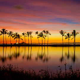 Silky Pink Sunset. by Warren Fintz - Landscapes Sunsets & Sunrises ( reflection, purple, silky, sunset, palm trees, trees, long exposure, pink, dusk, , the mood factory, mood, lighting, sassy, colored, colorful, scenic, artificial, lights, scents, senses, hot pink, confident, fun, mood factory  )