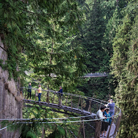 Capilano Suspension Bridge Park by Judy Rosanno - Buildings & Architecture Bridges & Suspended Structures ( park, canada, cliff, forest, bridges,  )