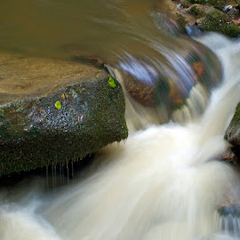 by Siniša Almaši - Nature Up Close Water ( water, up close, stream, nature, stone, forest, rock, view, light, river )