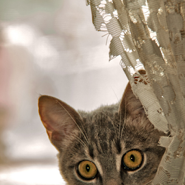 PEEK A BOO by Mihai  Costea - Animals - Cats Playing
