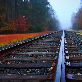 Tracks in Fog by Carol Plummer - Transportation Railway Tracks ( railway, fog, train, transportation, tracks,  )
