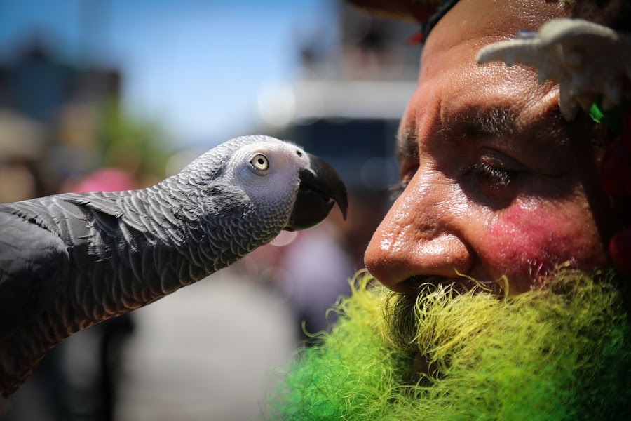 Beak To Nose by VAM Photography - People Street & Candids ( bird, cities, parrot, places, nyc, people, street photography )