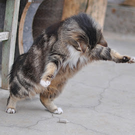 Playing cat by Maja  Marjanovic - Animals - Cats Playing ( kitten, cat, pat, fluffy, animal )
