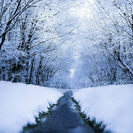 by Kathryn Johnson - Landscapes Weather ( water, cold, nature, waterscape, snow, white, moody, snowscape, atmosphere, weather, lines, morning )