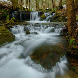State Gamelands by Clare Kaczmarek - Landscapes Forests ( forests, waterfalls, pa, moss, streams, laurel highlands, woods )