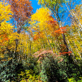 Fall Color, Smoky Mountains by Patrick Flood - Landscapes Mountains & Hills ( canon, photosbyflood, national park, reds, yellows, fall colors, tennessee, oranges, smoky mountains )