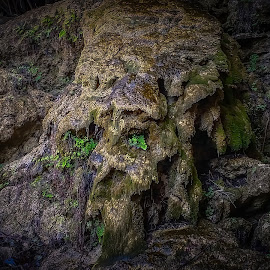 Nature's Creation by Marc Mulkey - Nature Up Close Rock & Stone ( water, face, pool, texas, hamilton, vegatation, rock, man )