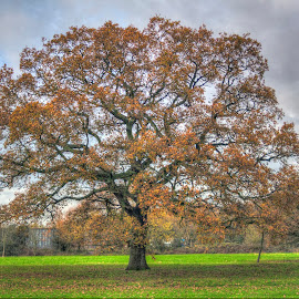 Grand Tree by Jonathan Thomas - Nature Up Close Trees & Bushes ( goodness, grand tree, hdr, tree, grass, green )