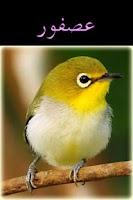 Screenshot of Arabic-Animal Baby Flash Cards