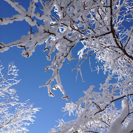 Blue and White by Kimberly Morehouse - Nature Up Close Trees & Bushes
