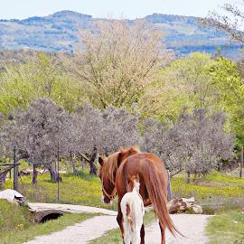 HORSES  by Katarzyna Malinowska - Animals Horses ( horses small tuscany italy )