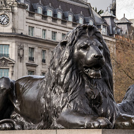 Trafalgar Square Lions, London by Adele Southall - City,  Street & Park  Historic Districts (  )