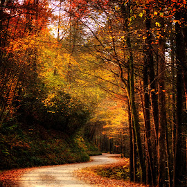 Mountain Back Road in Fall by Greg Mimbs - City,  Street & Park  City Parks ( ride, back road, yellow, glow, greg mimbs, north carolina, western north carolina, autumn, shadow, light, orange, peaceful, dirt road, greasy creek road, mountain road, mountain back road, wnc, colorful fall leaves, cherokee county, fall color, curvy, red, traveling, nc, fall, colorful leaves, golden,  )
