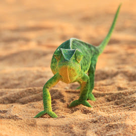 by James Blyth Currie - Animals Reptiles