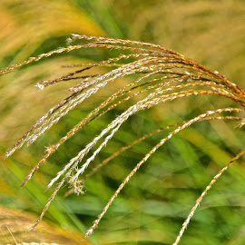 by Steven Aicinena - Nature Up Close Leaves & Grasses (  )