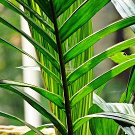 by Debashish Chakraborty - Novices Only Flowers & Plants