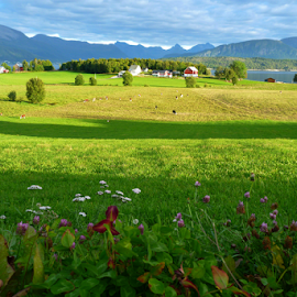 Green fields by Vladimir Kovalenko - Landscapes Prairies, Meadows & Fields ( green, cow, house, mesdow, skies, norway, fjord, field, mountains, sky, village, sunset, cloud, trees, gress, trip, flowers )