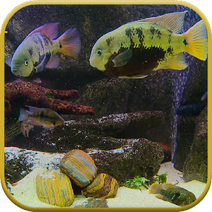 App fish tank live wallpaper apk for kindle fire for Fish tank app