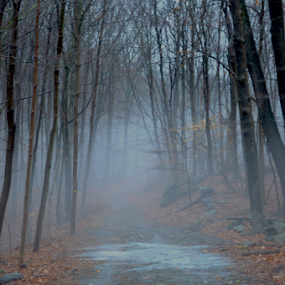 A Mysterious Path by Rob Kovacs - Novices Only Landscapes (  )