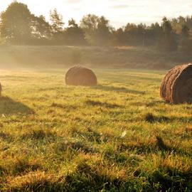 by Albina Jasinskaite - Landscapes Prairies, Meadows & Fields