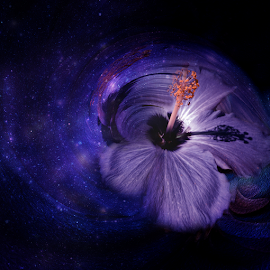 PAINT THE SKY by Carmen Velcic - Digital Art Abstract ( abstract, hibiscus, sky, blue, stars, violet, flowers, digital, universe )