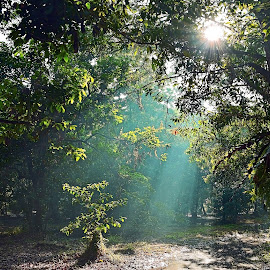 ROL dihutan by AbngFaisal Ami - Nature Up Close Trees & Bushes ( path, nature, landscape )