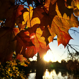 fall sunset by Marta Raczkowska-Radkiewicz - Instagram & Mobile Android