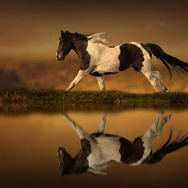 The Horse's Journey by Jennifer Woodward - Digital Art Animals ( water, animals, horses, nature, horse, reflections, landscape )