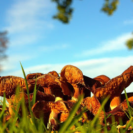 A Forest of Fungi by Chrissie Barrow - Nature Up Close Mushrooms & Fungi ( orange, sky, fungi, caps, grass, blue, low angle, brown, stalks, toadstools, mushrooms,  )