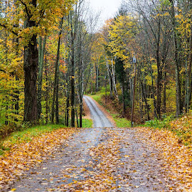 Autumn Road by Tom DiMatteo - Landscapes Travel ( fog, www.tomdimatteo.com, foliage, colors, fall, road, vermont, leaves )