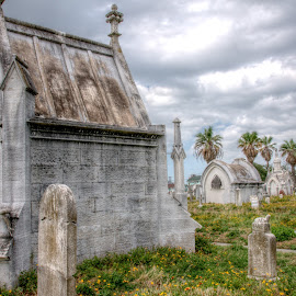 Old City Cemetery - Galveston by Michael McMurray - Buildings & Architecture Statues & Monuments ( palm, tomb, tree, headstone, monument, grave, historical, gravestone, historic )