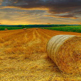 The field at dawn by Boris Frković - Landscapes Prairies, Meadows & Fields ( ravindu shanilka )