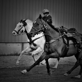 Horse Racing by Denise Johnson - Animals Fish ( equine, black and white, horse, sports, horse racing, people )
