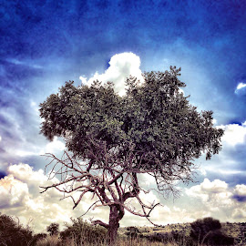 Africa my home by Tanya Pieterse - Nature Up Close Trees & Bushes ( #tree #nature #plant #clouds, #hills #park #naturereserve #tree #trees #hight #sky #cloudformations, #clouds #sky )