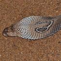 Spectacled Cobra