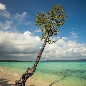 The tree by Eugen Chirita - Landscapes Travel ( water, sky, tree, blue, green, beach, landscape )
