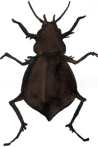 Museum Pest Ref