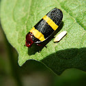 Colorful Froghopper