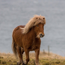 Beauty! by Sverre Sebjørnsen - Animals Horses