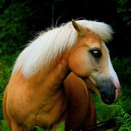by Alain Labbe Alain - Animals Horses