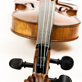 Violon by David Monjou - Artistic Objects Musical Instruments