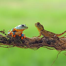 Hi Frog by Andri Priyadi - Animals Amphibians ( macro, animals, lizard, frog, indonesia, nikkor, nikon, chameleon, nikon d90, animal )
