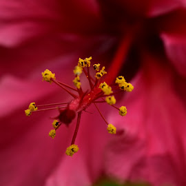 Close up.... l by Abdur Saad - Novices Only Macro ( macro, nature, close up flower, beauty in nature, flower )