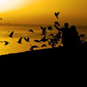 Morning  by Anurag Bhateja - Landscapes Sunsets & Sunrises ( sukhna lake, chandigarh, couple, india, sunrise, birds )