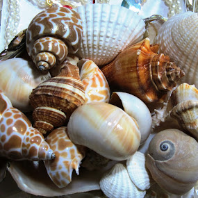 WE ALL CAME FROM SEA by Tina Banik - Artistic Objects Still Life ( , sea creatures, underwater life, ocean life )