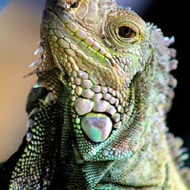 by MasHeru Sucahyono - Animals Reptiles