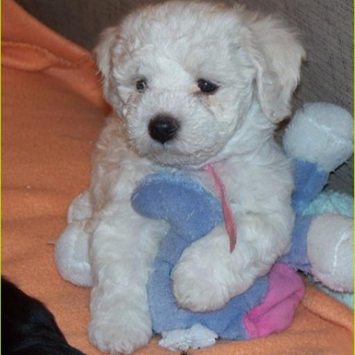 LITE Puppy Dog Theme CrazyHome LOGO-APP點子