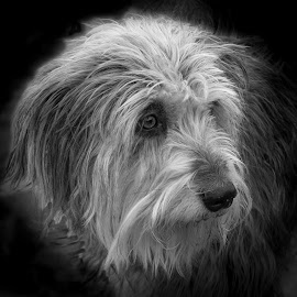 My friends Dog by Brian Noel - Animals - Dogs Portraits